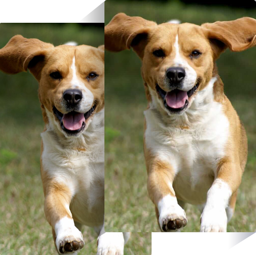 Dog photo compressed by image compressor